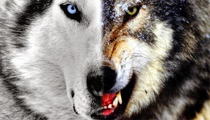 dois-lobos